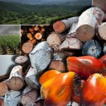 palm oil logging
