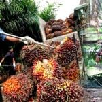 palm-oil-worker