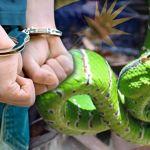 seludup-ular