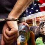 us_haiwan_handcuff_600