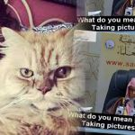 selfie-cat