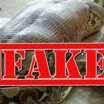snake_fake_600