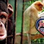 malaysian-friends-of-animal