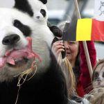 panda-belgium