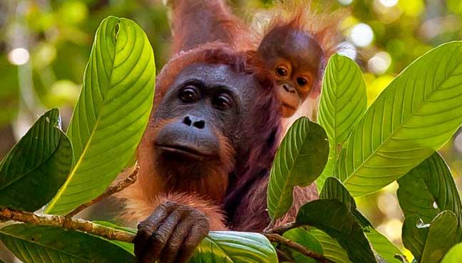 Asia-Pacific-Borneo-Wonders