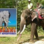 Langkawi Elephant Adventures