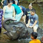 Malaysian-Friends-of-the-Animals