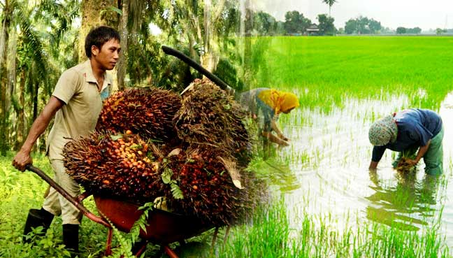 agriculture-1