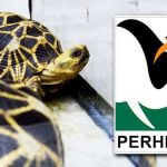 perhilitan-tortoise