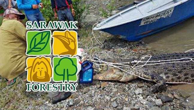 Sarawak Forestry Corporation (SFC)