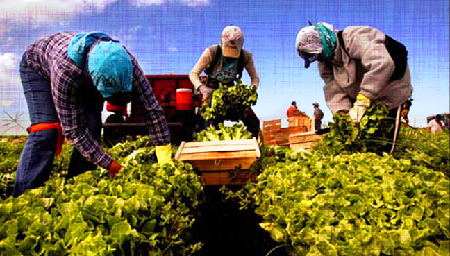 farm_workers