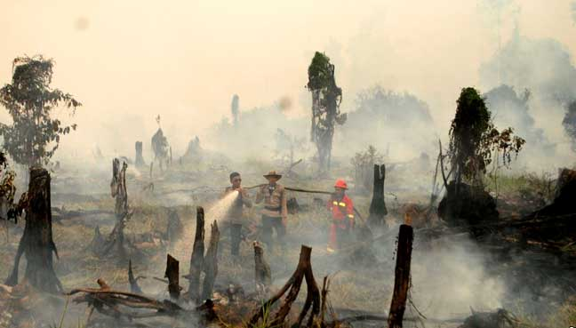 Indonesia condemns palm oil firm's hostage-taking over fires