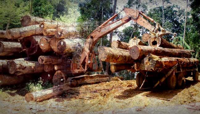 illegal-logging-1