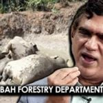 sabah-forestry-1