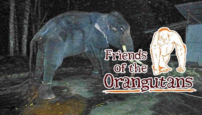 Friends of the Orangutans (Malaysia)