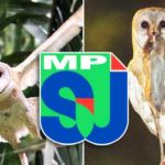 MPSJ-Barn-Owl
