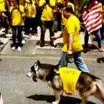 bersih_dog_6001