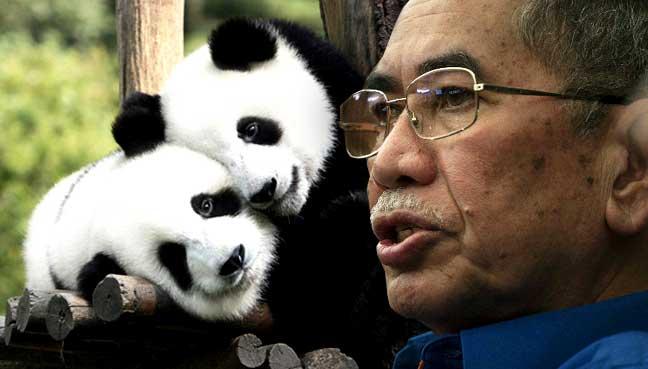 wan-junaidi-panda