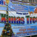 sri-lanka-xmas-tree