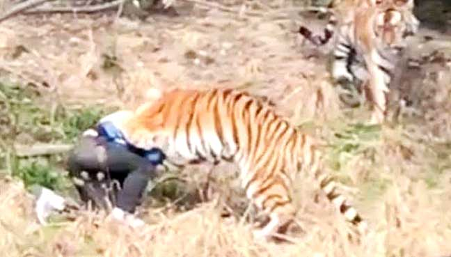 Tiger Killed In Chinese Zoo After Mauling Man to Death