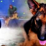 dog_water_600