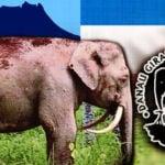 elephant_sabah_6001