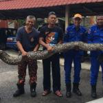 ular1