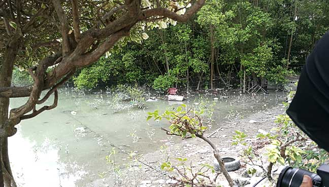 The mangrove trees will be gone once reclamation works begin. Rubbish from the high seas often end up here, brought in by tides.