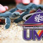 Universiti-Malaysia-Terengganu