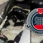 dog-smuggling-ica