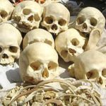 indian-skulls