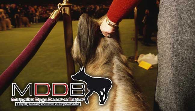 mddb-dogtrainner