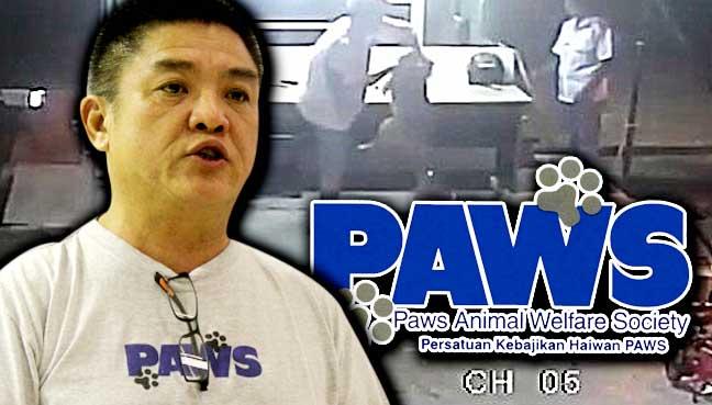 paws-1