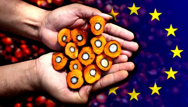 plam-oil_eu_6001