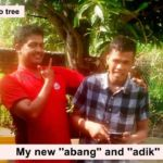 mango-tree-1