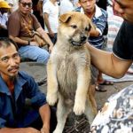 China's-dog-meat-festival