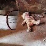Dusty-teddy-bear-lies-in-war-ruined-Philippine-city