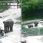 elephant-drown