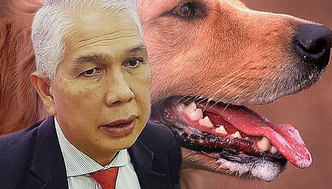 Third rabies victim in Sarawak dies