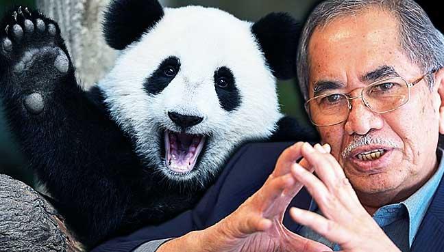 Wan-Junaidi-nuan-nuan-panda
