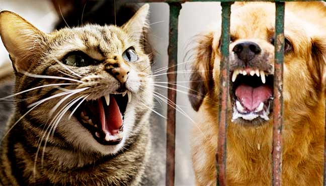 rabies outbreak order to lock up dogs cats in serian