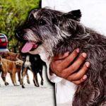 dog-vaccine-1
