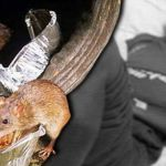 kencing-tikus-thaqif-kaki