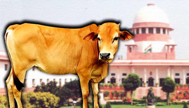 mahkamah-india-lembu