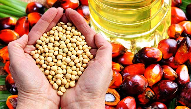 palmoil-soy-crops