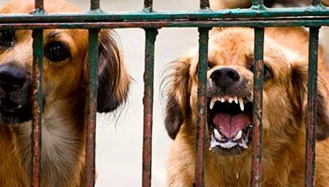 rabies-dog
