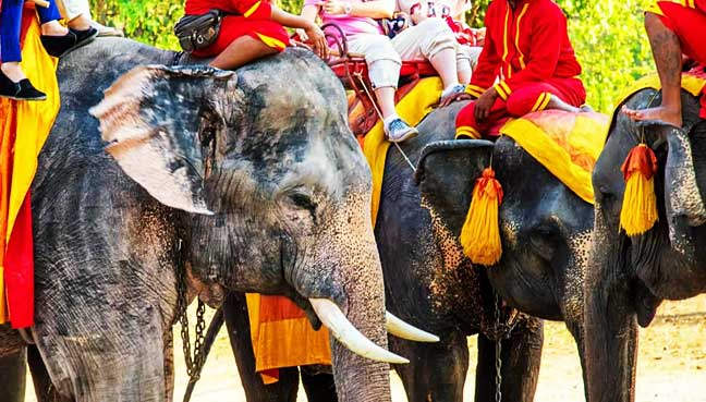 xpedia-to-remove-bookable-animal-tours