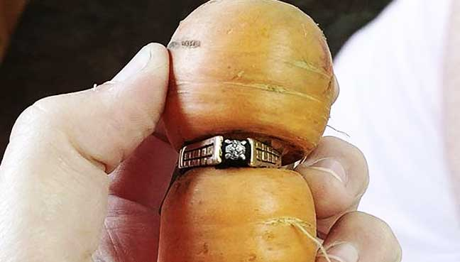 A Carrot With Carats: In-Law Unearths Lost Ring
