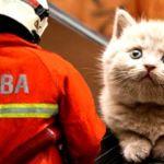 bomba_kucing_cat_600