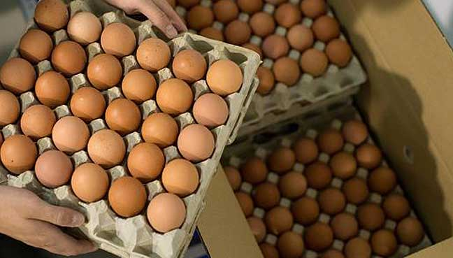 Hong Kong, Switzerland, 15 European Union  states hit by egg scandal